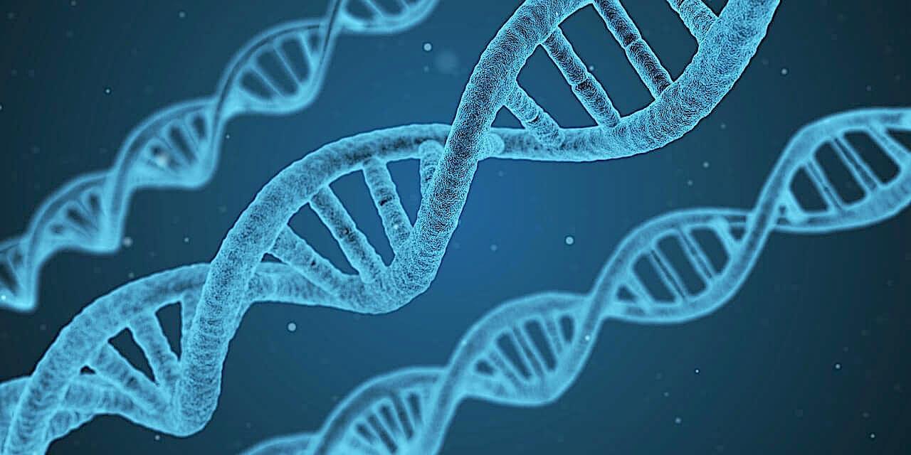 prédisposition génétique obésité